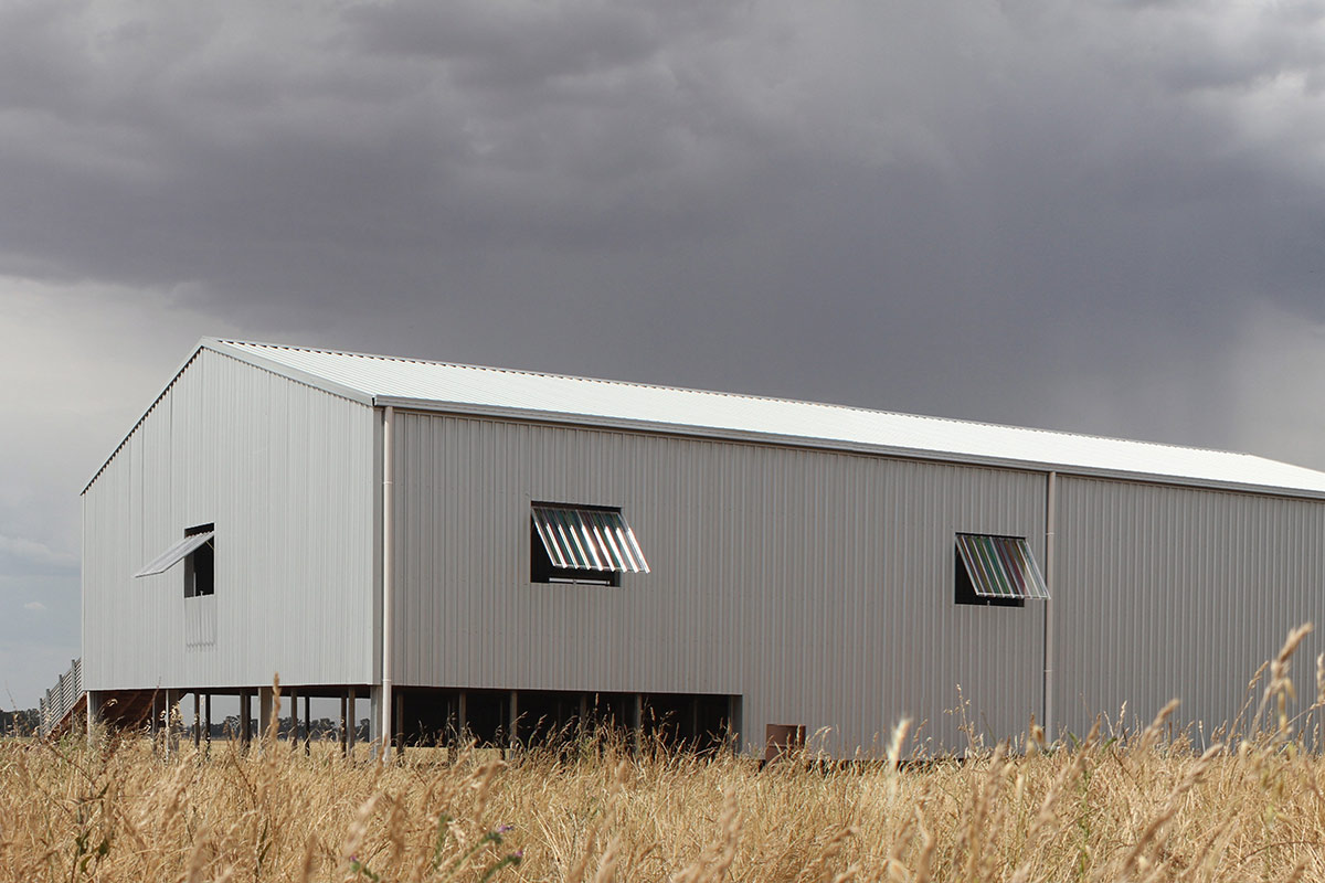 5 stand shearing shed